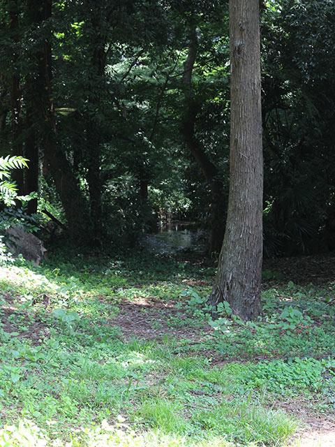 うっそうとした木立