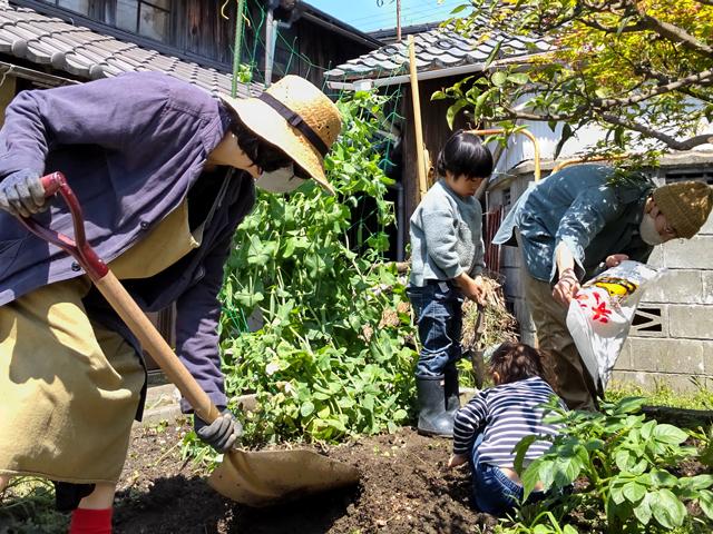 どんどん畑/第3章 マメの収穫とサツマイモの植えつけ